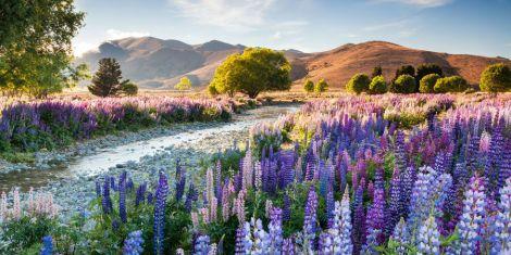 gallery-1457452122-landscape-1456831694-14092-richard-bloom
