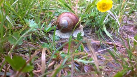 reiki snail