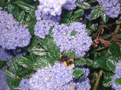purple bouquet & bee