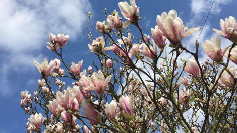 flowers & blue skies